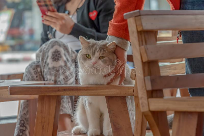 Friendly Cat and Friendly People. In Chaing Rai, Thailand stock photography
