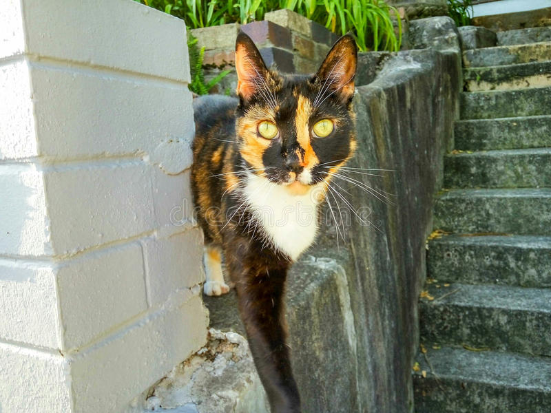 Download Friendly Cat Posing On Fence Stock Photo - Image: 76081809