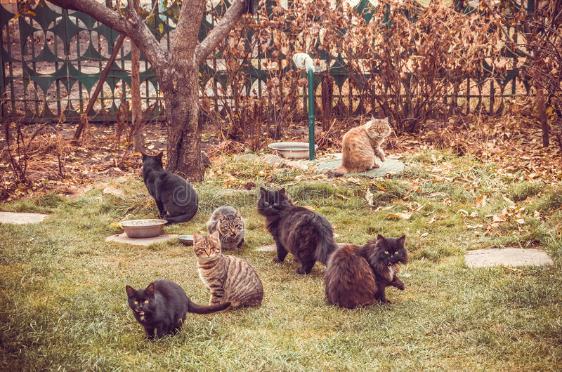 A friendly feline family. Home shelter for purebred cats stock image