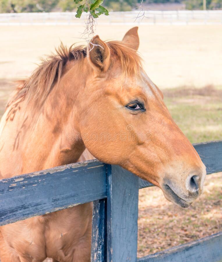 A friendly horse greeting at the fenceline stock photography