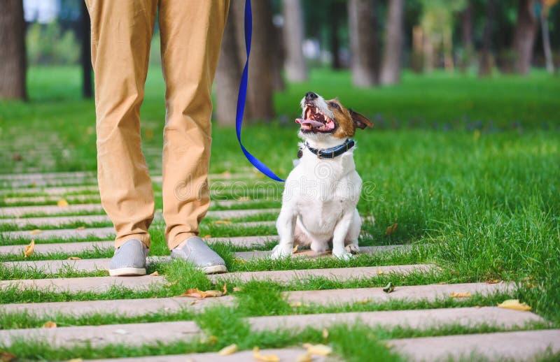Female dog sitter walking and training dog on leash stock images