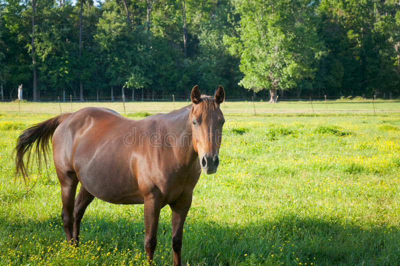 Download Friendly Mare in a Field stock photo. Image of domesticated - 27416058
