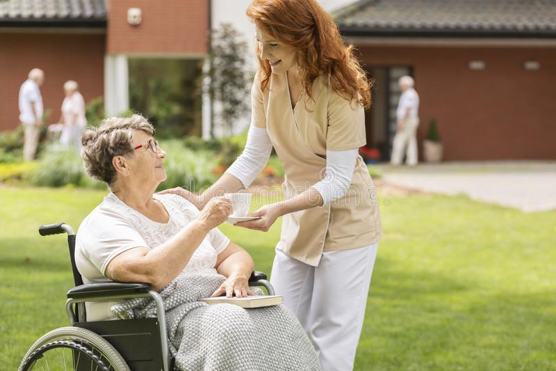 Friendly nurse giving tea to disabled senior woman in the wheelchair in the garden royalty free stock photo
