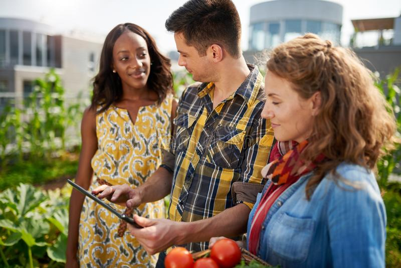 Friendly team harvesting fresh vegetables from the rooftop green stock images