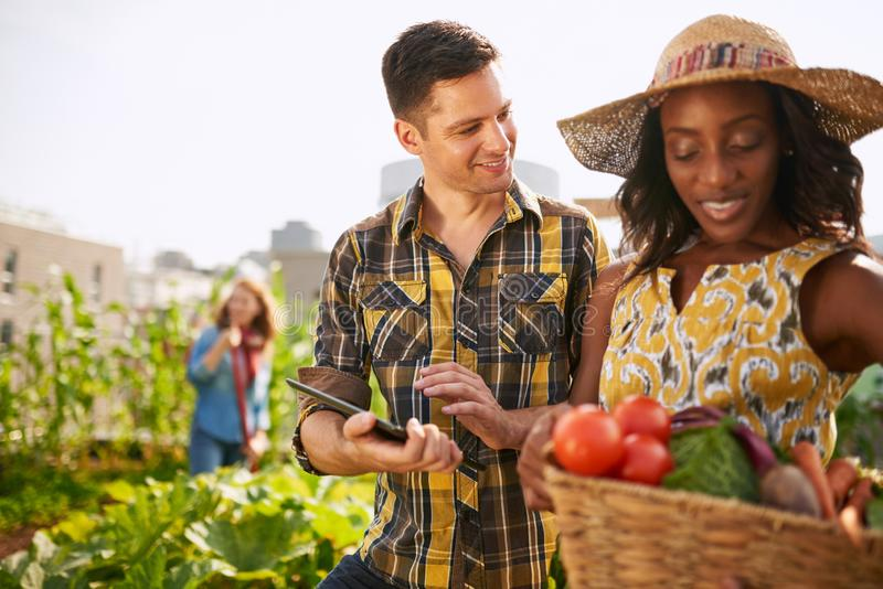 Friendly team harvesting fresh vegetables from the rooftop green royalty free stock photo