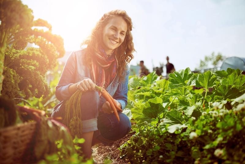 Friendly woman harvesting fresh vegetables from the rooftop gree royalty free stock images