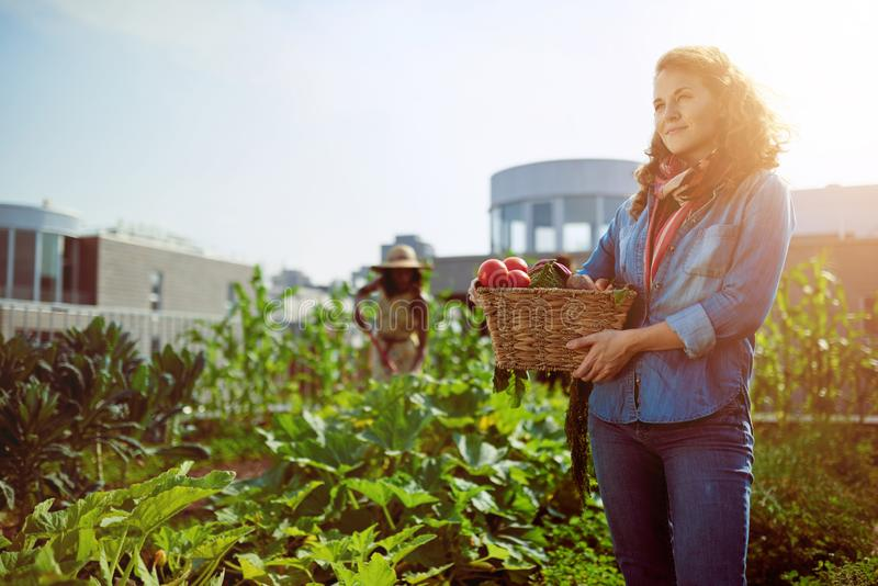 Friendly woman harvesting fresh vegetables from the rooftop gree royalty free stock photography