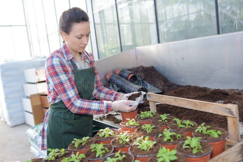Friendly woman nursing greenhouse garden stock photo