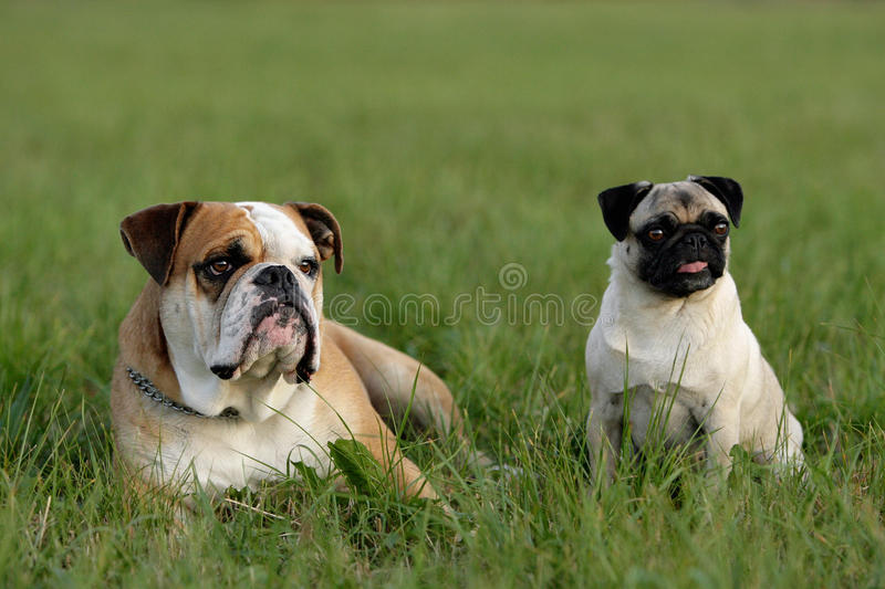 Download Friends stock image. Image of canine, funny, continental - 12848205