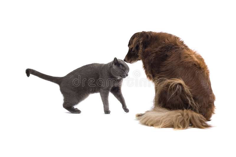 Friends. A brown dog sniffs the top of a gray cat's head royalty free stock photos
