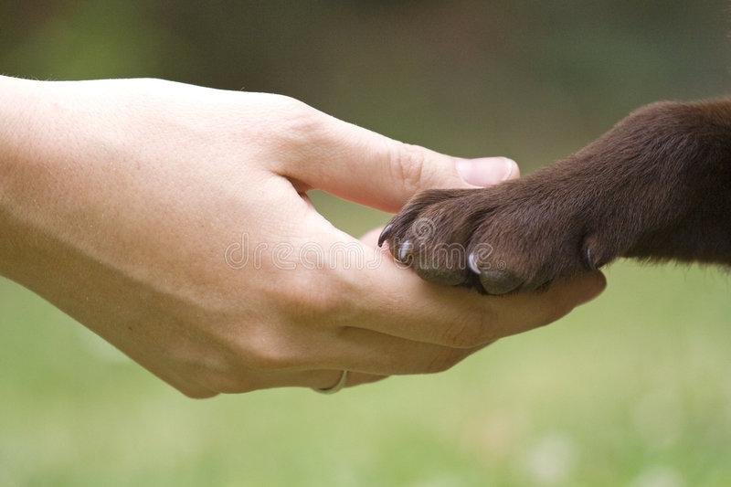 Friends. Hip between human and animal - puppy give woman paw - handshake royalty free stock photos