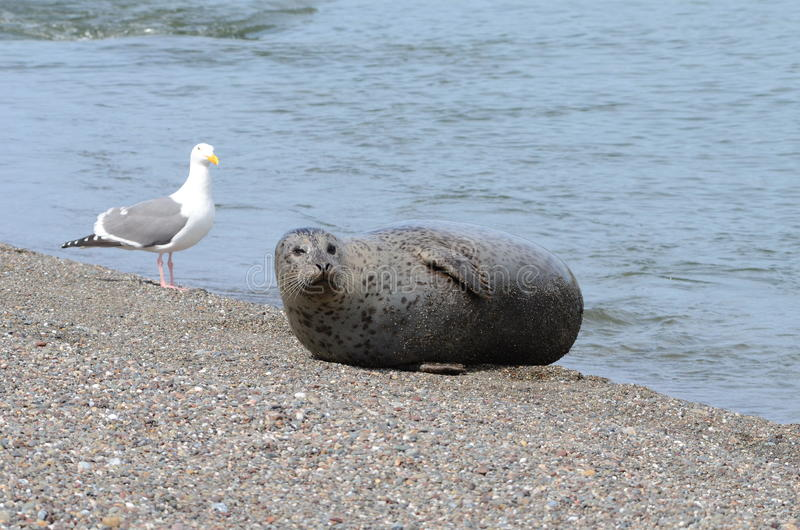 Download Friends at the beach stock photo. Image of seal, beach - 30477102