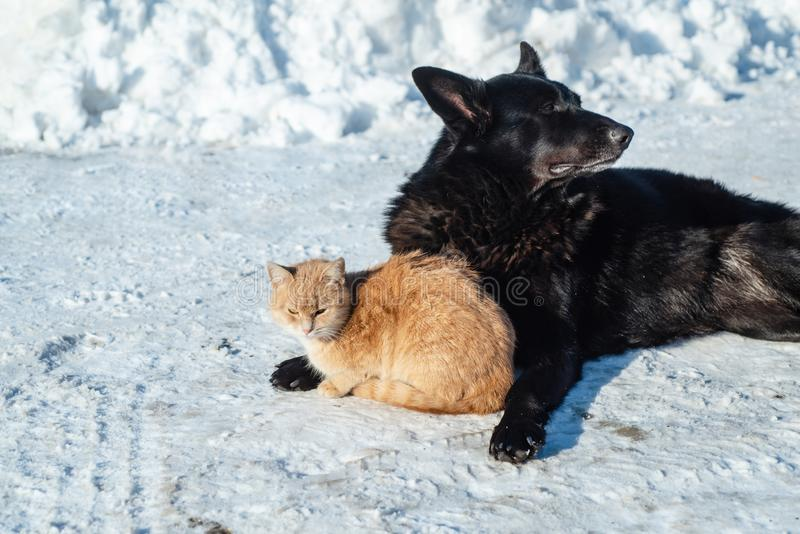 Friends. Cat and dog in the snow. Winter. Animals bask together. Pets on the street. Homeless animals. royalty free stock images