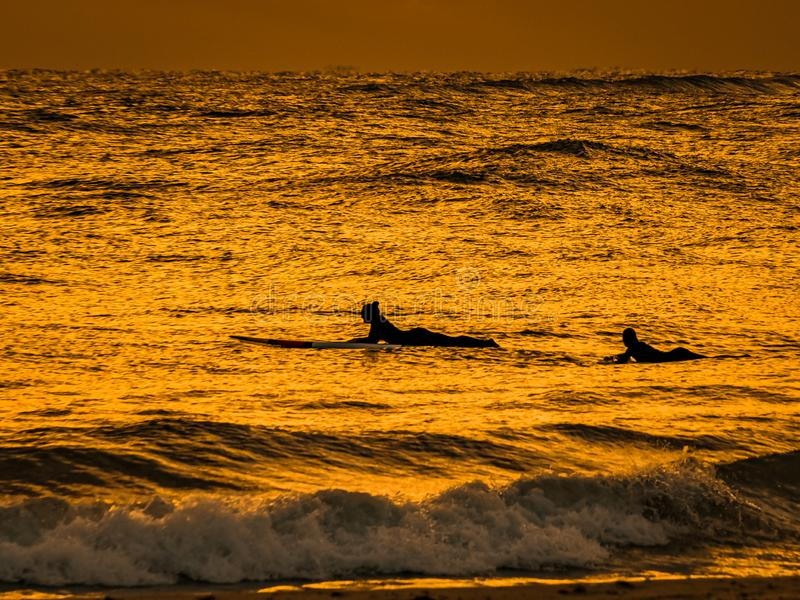 Friends in the Golden Surf. Two friends paddling their surf boards toward the horizon as the early morning light reflects its golden glow on the ocean around stock photo