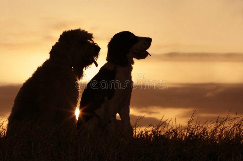 Friends at sunset. 2 dogs at sunset
