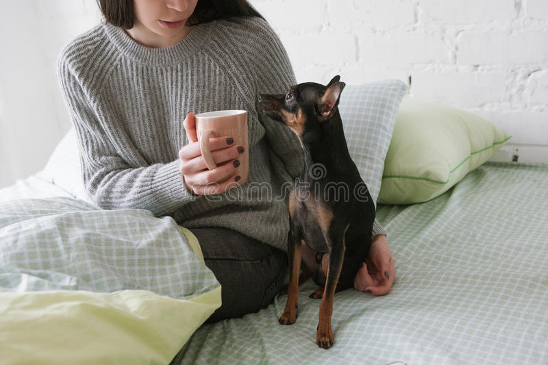 Friendship between dog and human stock image