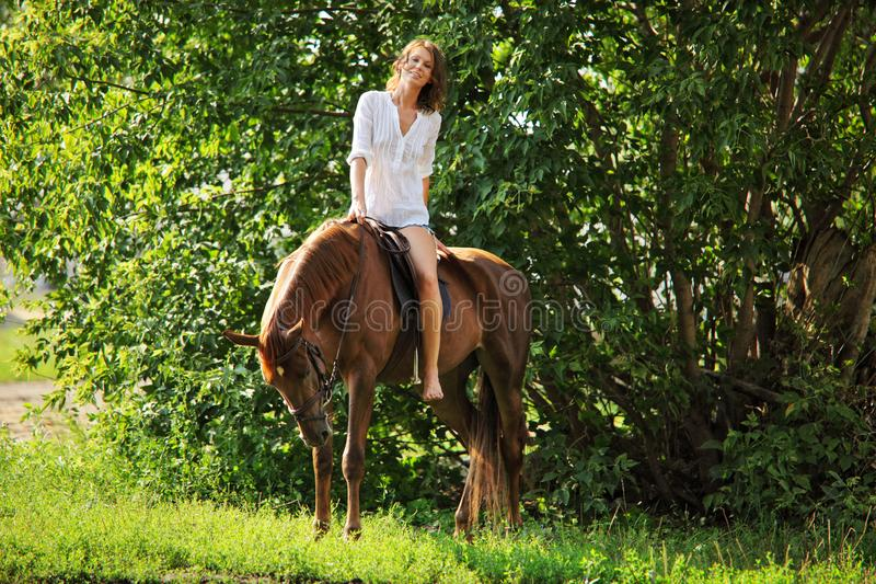 Friesian häststående för dressyr tre i utomhus- royaltyfri fotografi