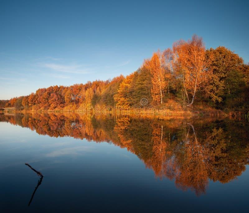 Frigöra det europeiska höstlandskapet i orangefärgade och blå färger vid solnedgång En spegelbild av den röda skogen från hösten  royaltyfri foto