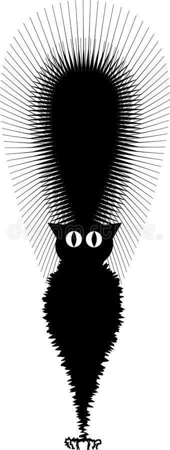 Frightened Black Cat royalty free stock image