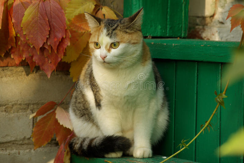 Download Frightened cat stock image. Image of porch, autumn, favorite - 21824705