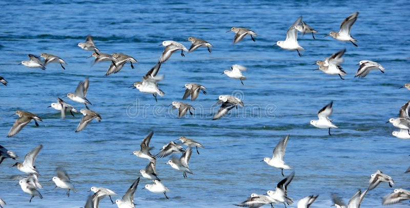 Download Frightened Flock of birds stock photo. Image of flap, flock - 3494108