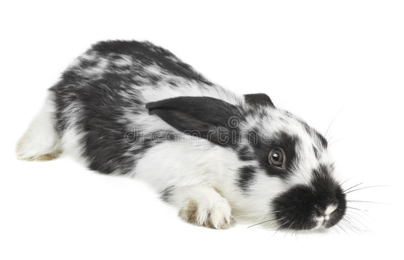 Download Frightened Little Baby Rabbit Stock Image - Image: 24786613