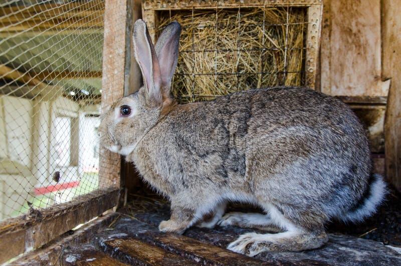 Frightened rabbit stock photo