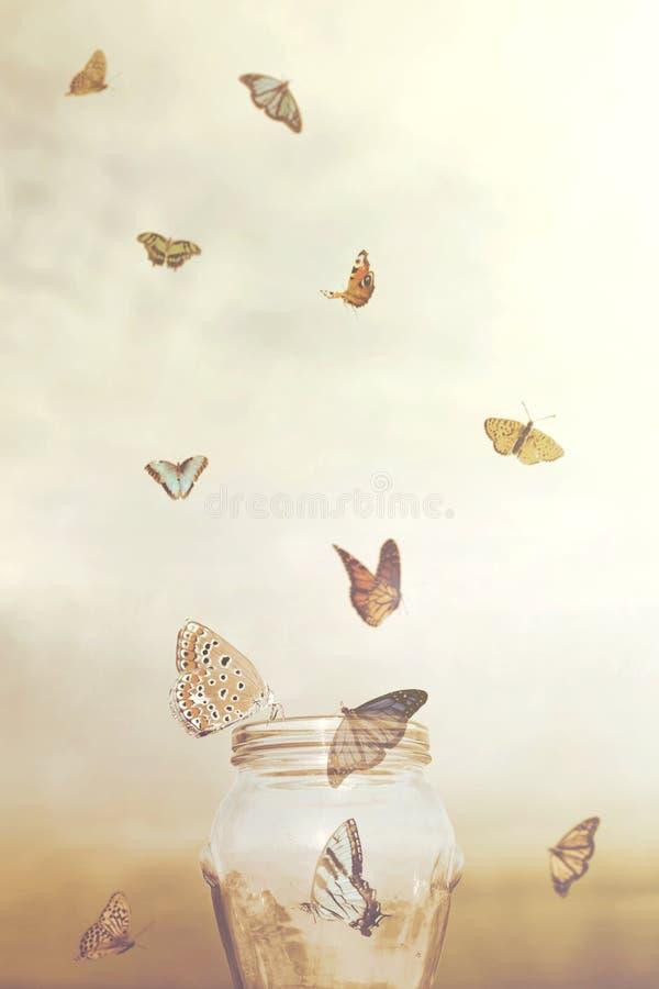 Frihetsbegrepp för en grupp av fångefjärilar i en vas royaltyfri fotografi