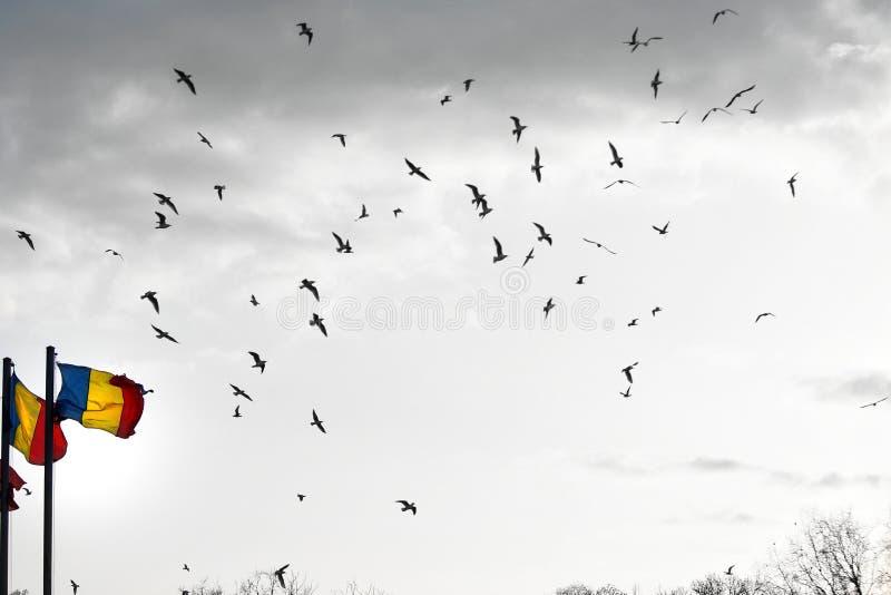 Frihetsfåglar i himmel royaltyfri bild