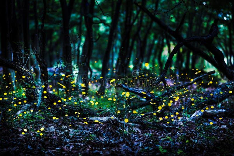 Frireflies die in het bos bij schemer vliegen royalty-vrije stock afbeeldingen