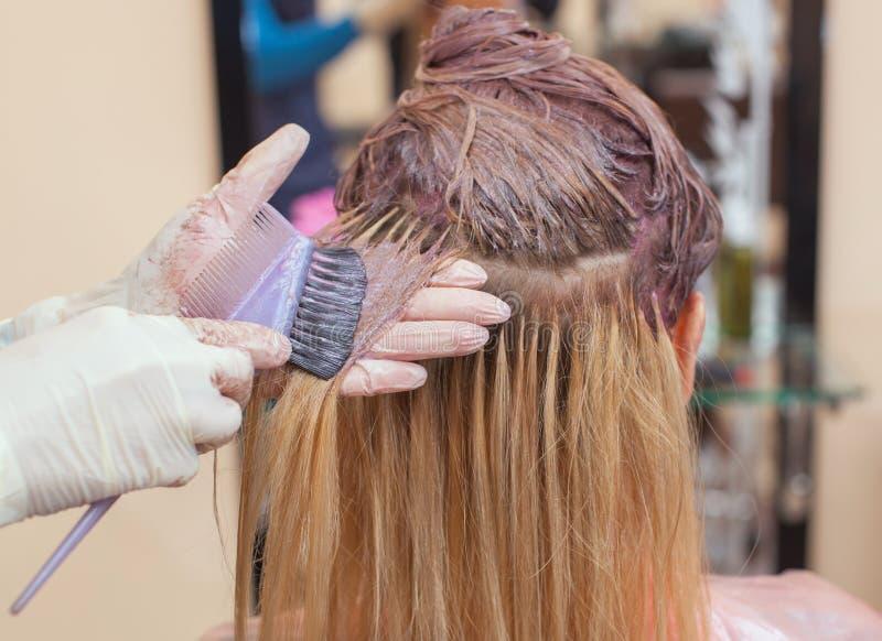 Frisören målar håret för kvinna` s i vit, applicerar målarfärgen till hennes hår royaltyfri bild