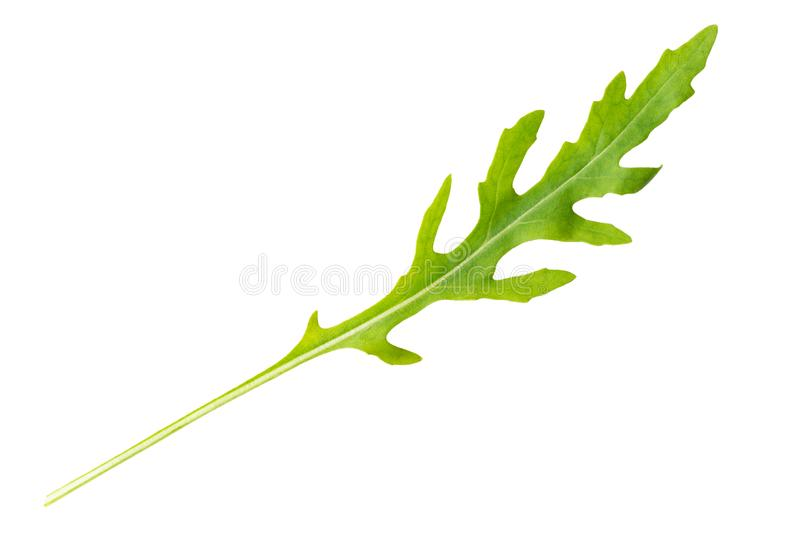 fris arugula leaf op wit stock foto's