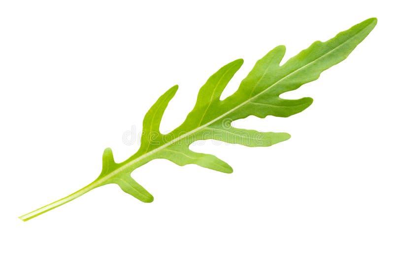 fris arugula leaf op wit stock afbeelding