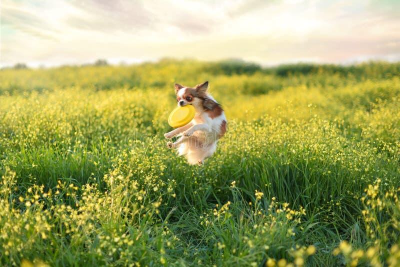 Frisbee задвижек собаки скача стоковая фотография
