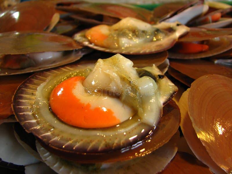 Frisch öffnen Sie Kamm-Muscheln stockfoto