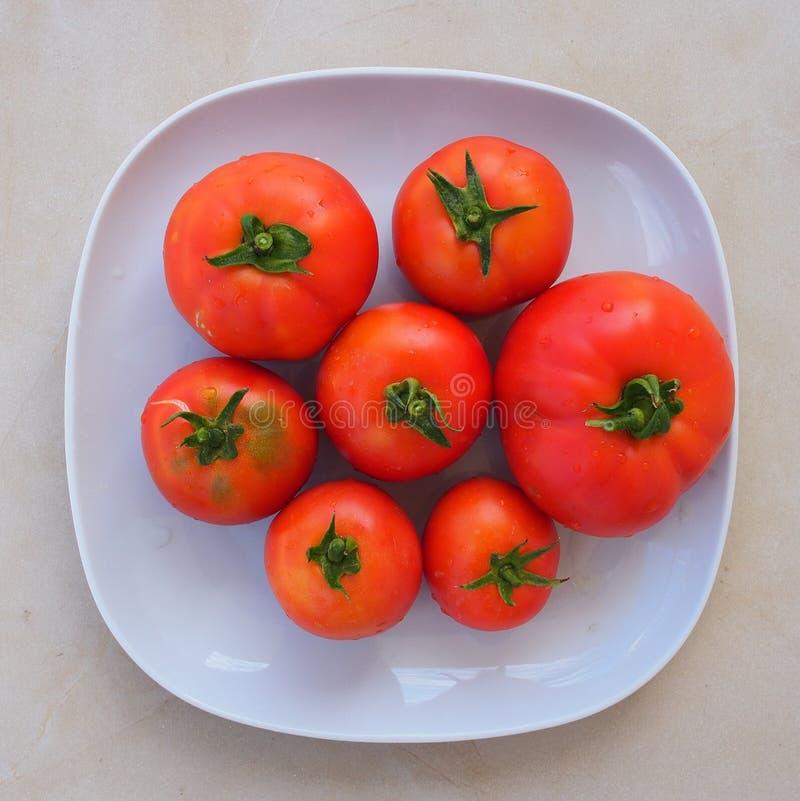 Frisch ausgewählte organische Tomaten stockbild