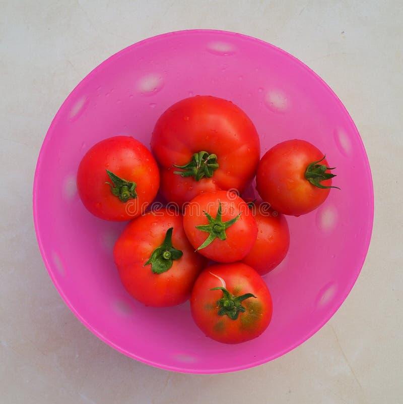 Frisch ausgewählte organische Tomaten lizenzfreie stockbilder