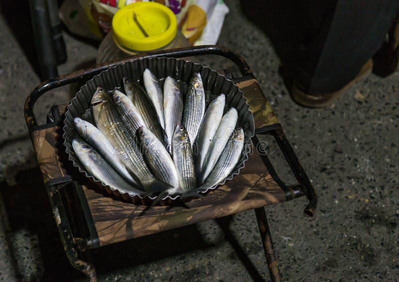Frisch gefangene Fische vom goldenen Horn, Istanbul Ein Eimer von Meeräschenfischen und von Plastikkasten der Sardine lizenzfreie stockfotos