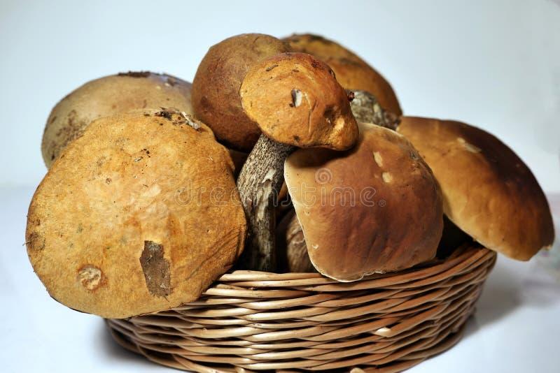 Frisch gepflückte reifen Pilze im Korb lizenzfreie stockbilder