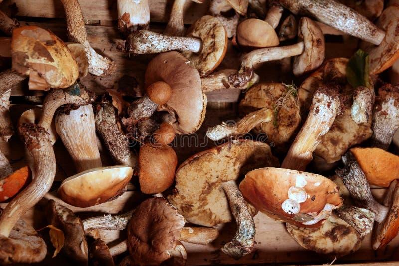 Frisch gepflückte reifen Pilze im Korb stockbilder