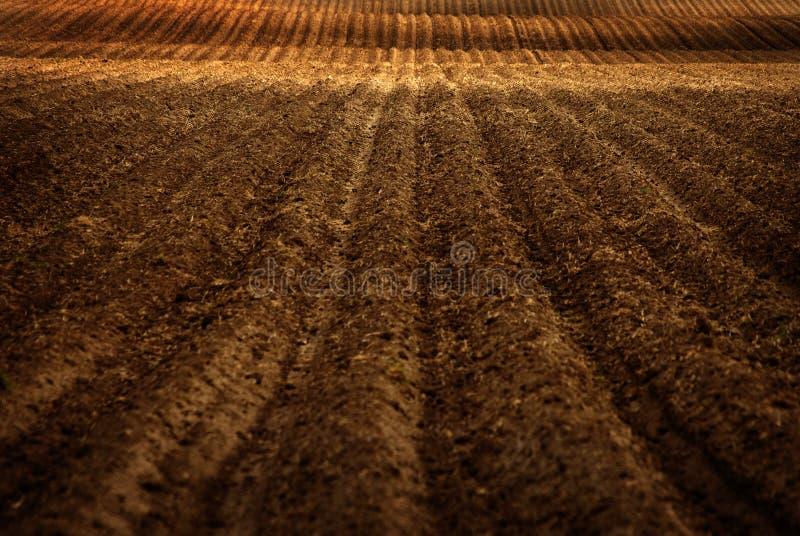 Frisch gepflogenes Bauernhof-Feld für die Landwirtschaft lizenzfreies stockfoto
