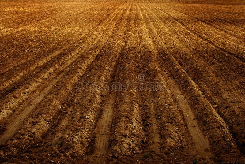Frisch gepflogenes Bauernhof-Feld für die Landwirtschaft stockfoto