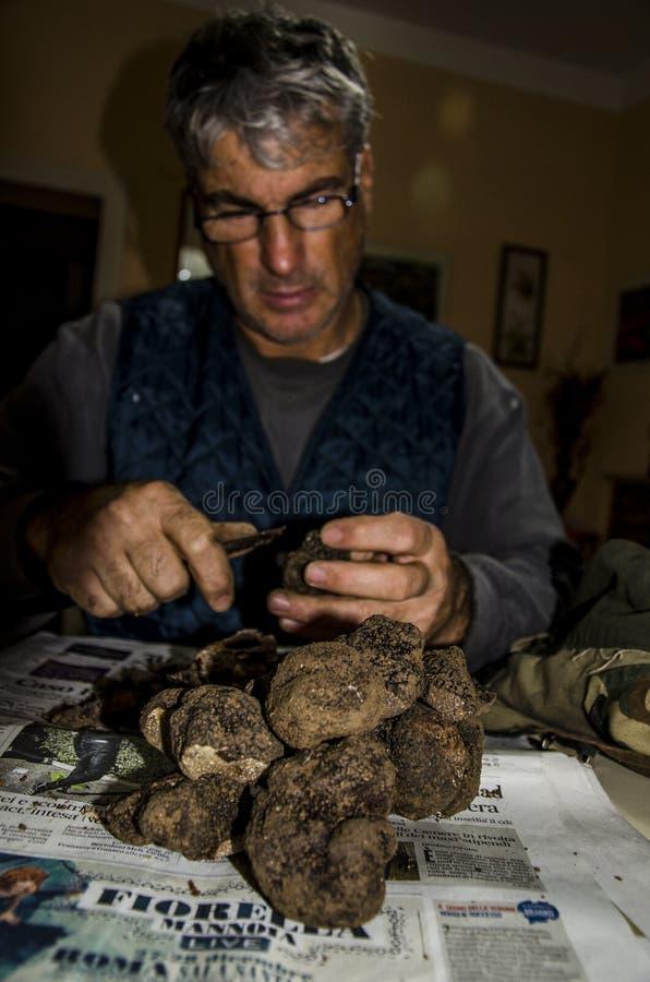 Frisch herumgesuchte schwarze Trüffeln stockfoto