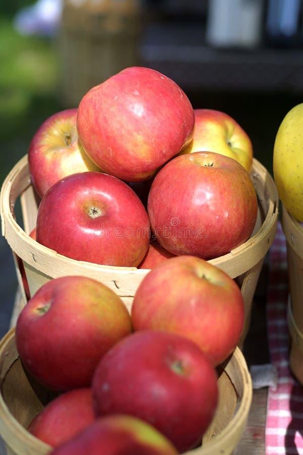 Frische Äpfel lizenzfreies stockfoto