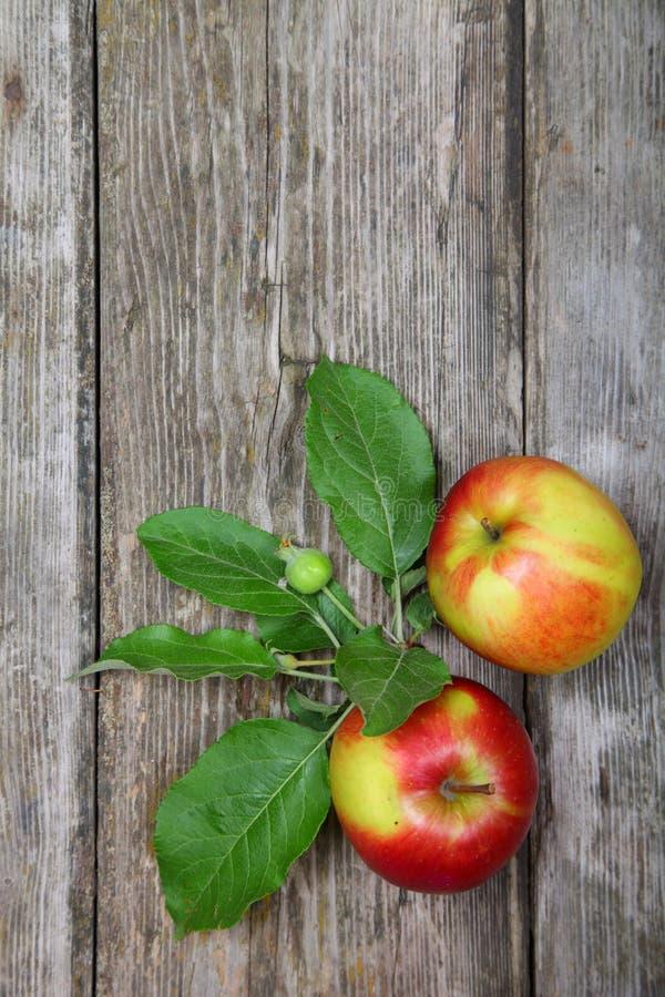 Frische Äpfel stockbilder