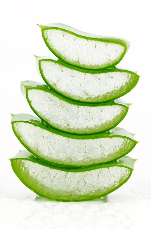 Frische Aloe Vera auf weißem Hintergrund lizenzfreie stockbilder