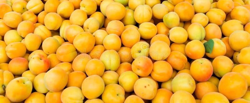 Frische Aprikosen, Hintergrund lizenzfreie stockbilder