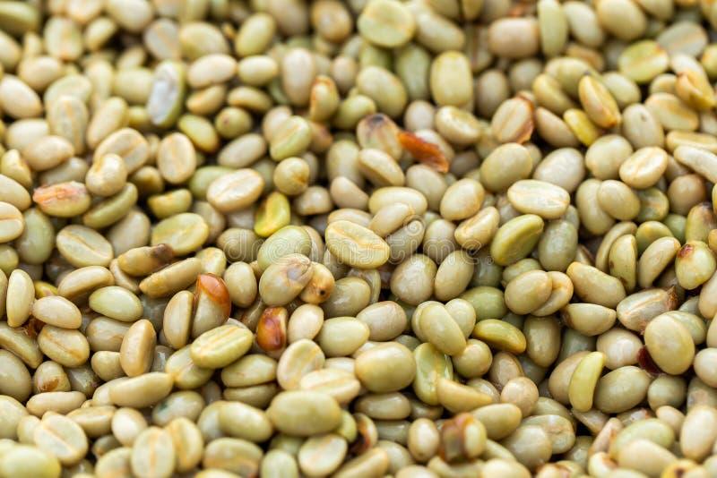 Frische Arabicakaffeekirschen Organischer Kaffebauernhof stockbild