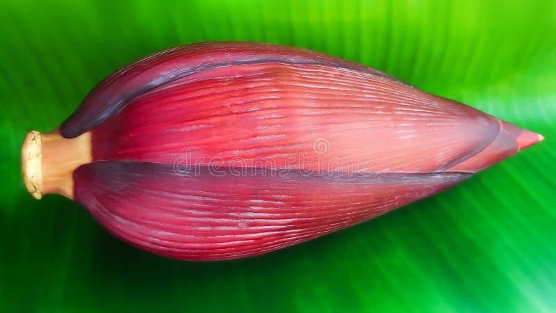 Frische Bananenblüte auf Bananenblatt lizenzfreie stockbilder