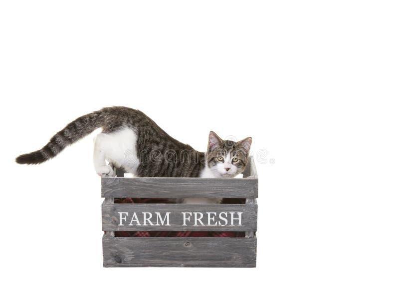 Frische Bauernhof-Miezekatze lizenzfreie stockfotografie